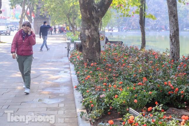 Hà Nội rực rỡ hoa chào mừng Đại hội Đảng lần thứ XIII ảnh 6