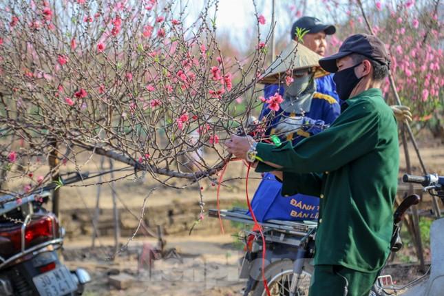 Đào bung nở, làng Nhật Tân nghẽn lối vào ngày cận Tết ảnh 13