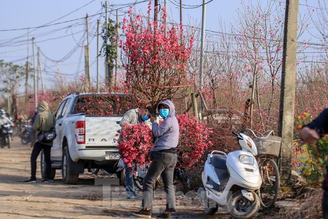 Đào bung nở, làng Nhật Tân nghẽn lối vào ngày cận Tết ảnh 14