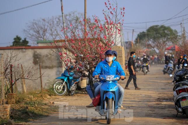 Đào bung nở, làng Nhật Tân nghẽn lối vào ngày cận Tết ảnh 6