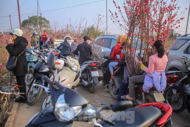Đào bung nở, làng Nhật Tân nghẽn lối vào ngày cận Tết ảnh 9