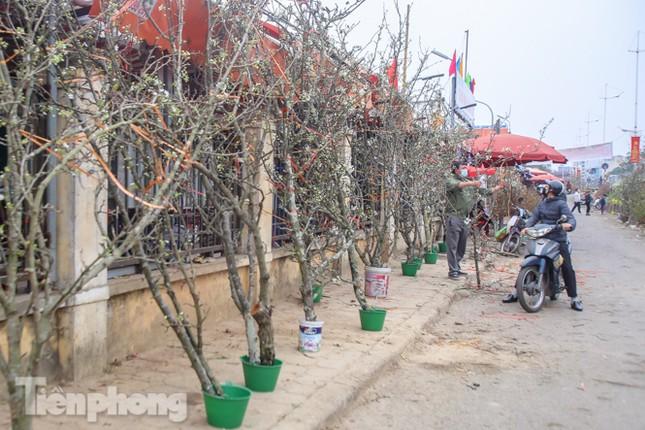 Người dân Hà Thành bỏ tiền triệu mua hoa lê chơi sau Tết ảnh 11
