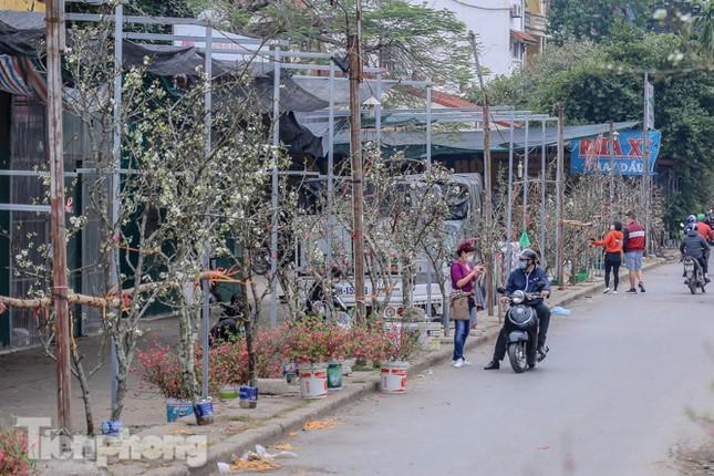 Người dân Hà Thành bỏ tiền triệu mua hoa lê chơi sau Tết ảnh 14