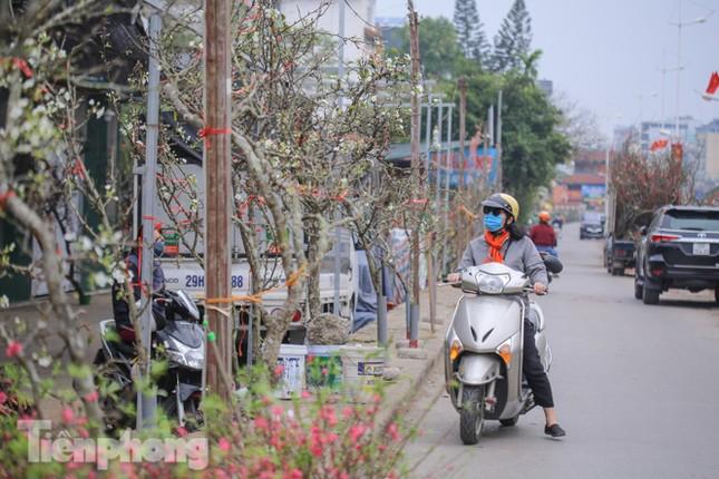 Người dân Hà Thành bỏ tiền triệu mua hoa lê chơi sau Tết ảnh 17