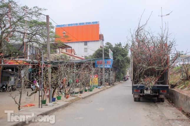 Người dân Hà Thành bỏ tiền triệu mua hoa lê chơi sau Tết ảnh 18