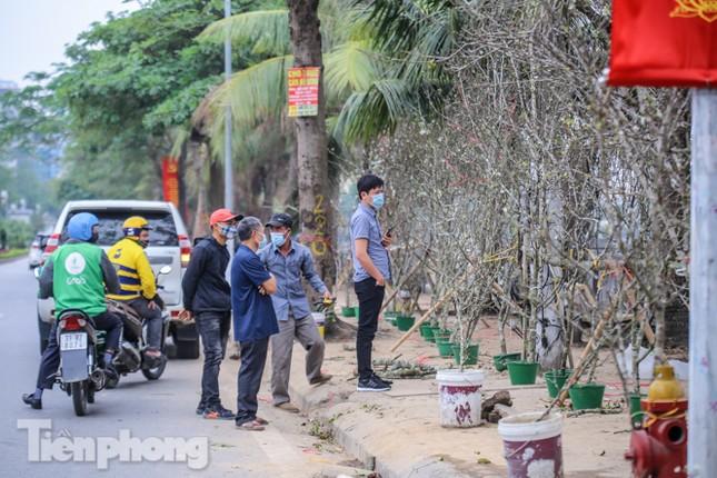 Người dân Hà Thành bỏ tiền triệu mua hoa lê chơi sau Tết ảnh 5