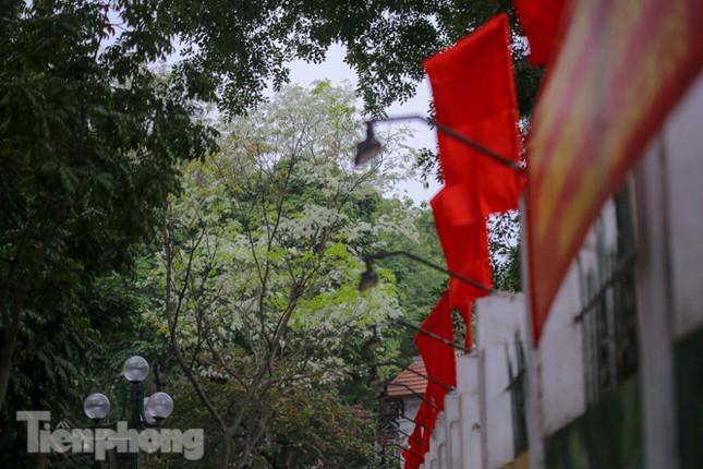 Ngắm hoa sưa 'phủ tuyết' phố phường Hà Nội ảnh 16