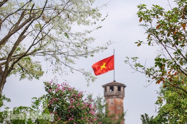 Ngắm hoa sưa 'phủ tuyết' phố phường Hà Nội ảnh 3