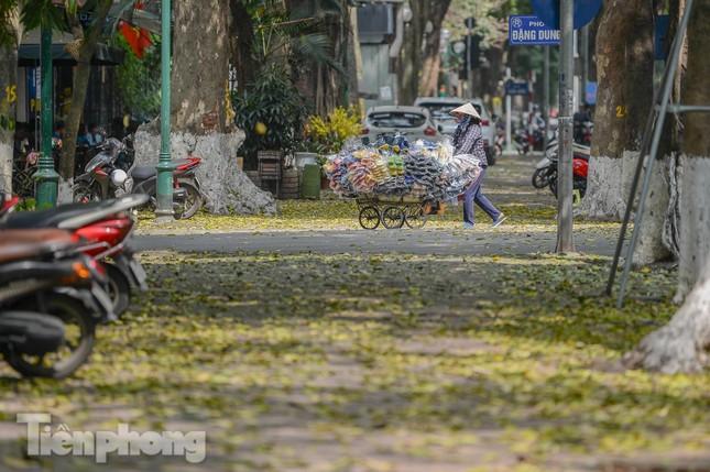 Người dân Thủ đô mê mẩn mùa lá sấu rụng ảnh 1