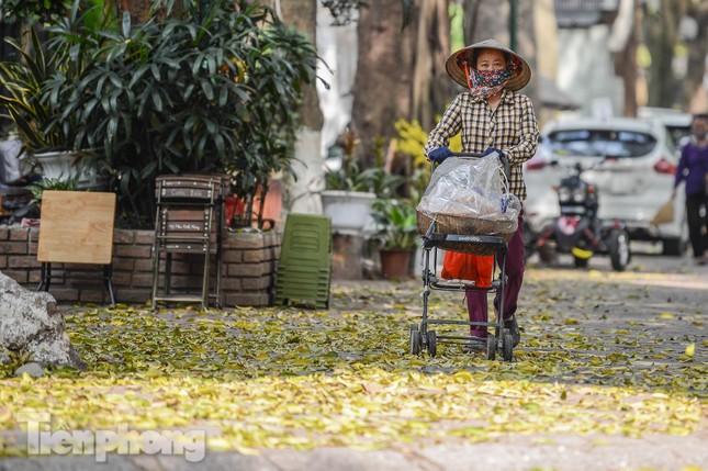 Người dân Thủ đô mê mẩn mùa lá sấu rụng ảnh 14