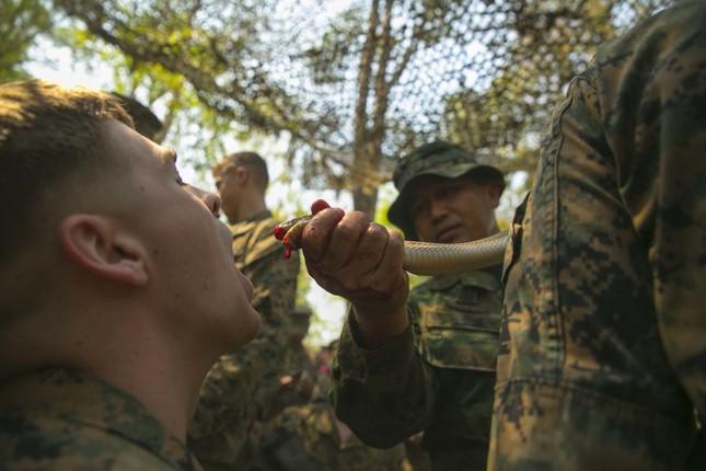Lính Mỹ học cách ăn sống bọ cạp để tồn tại trong rừng ảnh 2