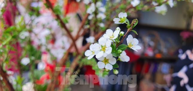 Độc đáo 'hoa nghìn nụ' được người dân đất Cảng săn đón dịp tết ảnh 7