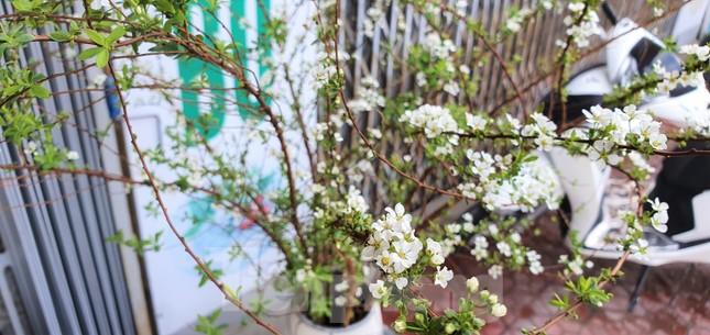 Độc đáo 'hoa nghìn nụ' được người dân đất Cảng săn đón dịp tết ảnh 1
