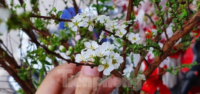Độc đáo 'hoa nghìn nụ' được người dân đất Cảng săn đón dịp tết ảnh 5