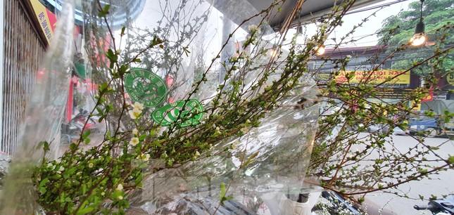 Độc đáo 'hoa nghìn nụ' được người dân đất Cảng săn đón dịp tết ảnh 8