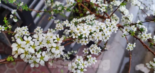 Độc đáo 'hoa nghìn nụ' được người dân đất Cảng săn đón dịp tết ảnh 4