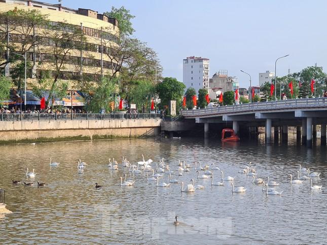 Đông người đến ngắm 65 đôi thiên nga được thả trên sông Tam Bạc ảnh 3