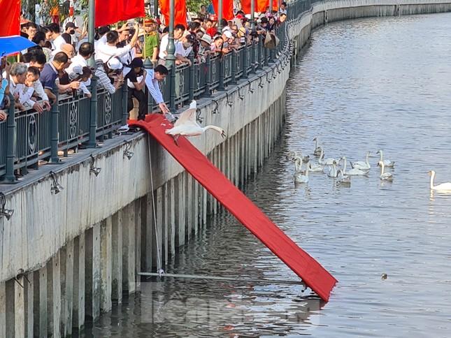 Đông người đến ngắm 65 đôi thiên nga được thả trên sông Tam Bạc ảnh 1