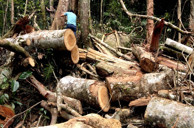 Đã khoanh vùng được nhóm đối tượng đưa máy cày độ vào phá rừng Kon Plong ảnh 2