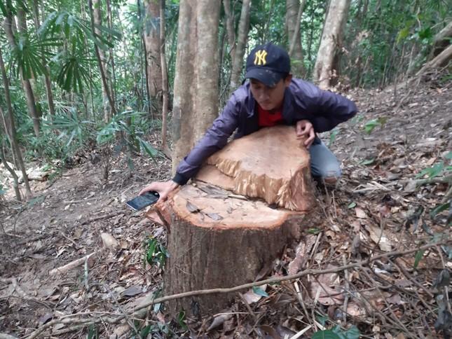 Cận cảnh điểm phá rừng gần trụ sở uỷ ban xã ở Gia Lai ảnh 6