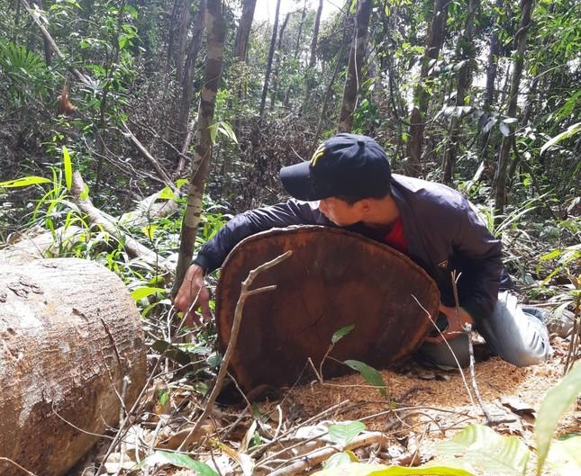 Cận cảnh điểm phá rừng gần trụ sở uỷ ban xã ở Gia Lai ảnh 2