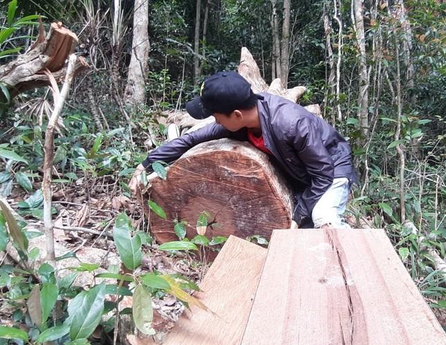 Cận cảnh điểm phá rừng gần trụ sở uỷ ban xã ở Gia Lai ảnh 5