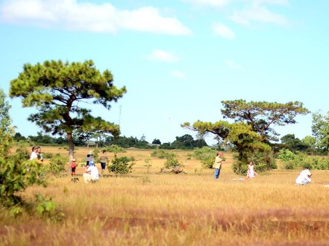 Đổ xô tới ngọn đồi bị loại cỏ 'nhuộm' màu hồng quyến rũ ảnh 4