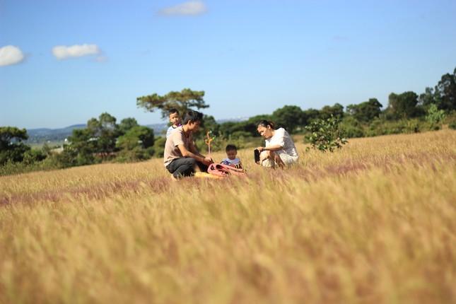 Đổ xô tới ngọn đồi bị loại cỏ 'nhuộm' màu hồng quyến rũ ảnh 6
