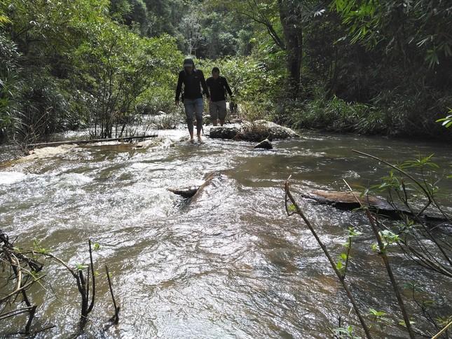 Tận thấy hiện trường rừng giáng hương cổ thụ bị tàn phá ở Tây Nguyên ảnh 1