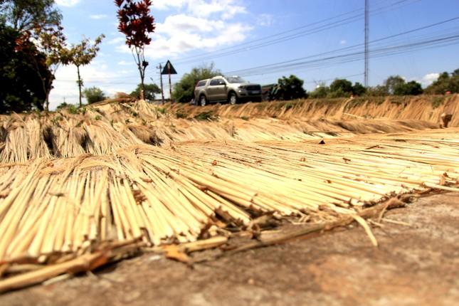 Cận Tết, người dân miền núi Gia Lai đổ xô kiếm 'lộc trời' ảnh 9