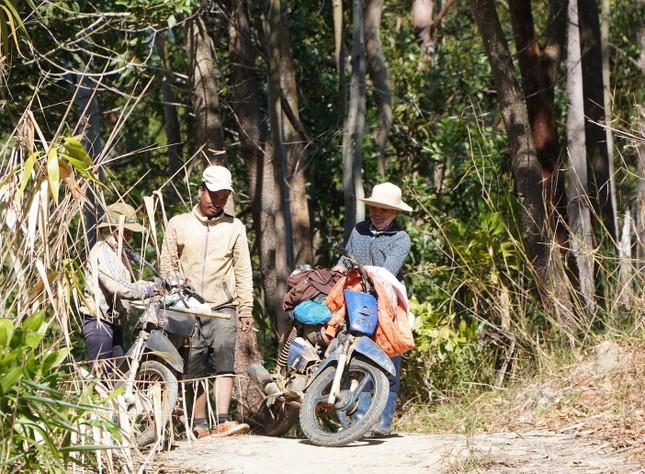 Cận Tết, người dân miền núi Gia Lai đổ xô kiếm 'lộc trời' ảnh 1