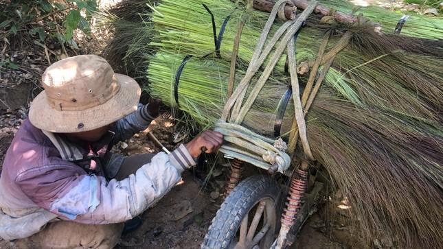 Cận Tết, người dân miền núi Gia Lai đổ xô kiếm 'lộc trời' ảnh 3