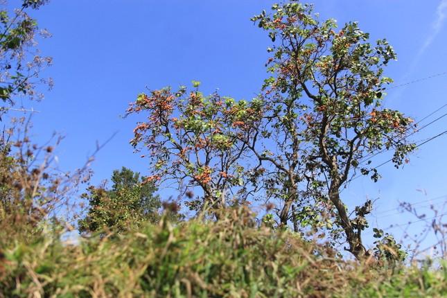 Ngắm loài hoa 'độc nhất vô nhị' ở Tây Nguyên ảnh 1
