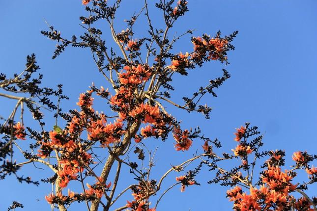 Ngắm loài hoa 'độc nhất vô nhị' ở Tây Nguyên ảnh 6