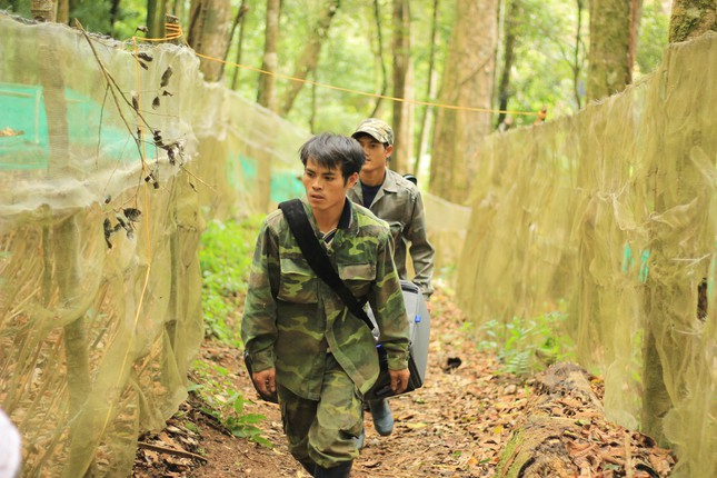 Kỳ lạ vườn sâm quý giúp giữ rừng ở Kon Tum ảnh 6