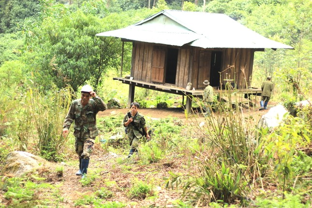 Kỳ lạ vườn sâm quý giúp giữ rừng ở Kon Tum ảnh 5