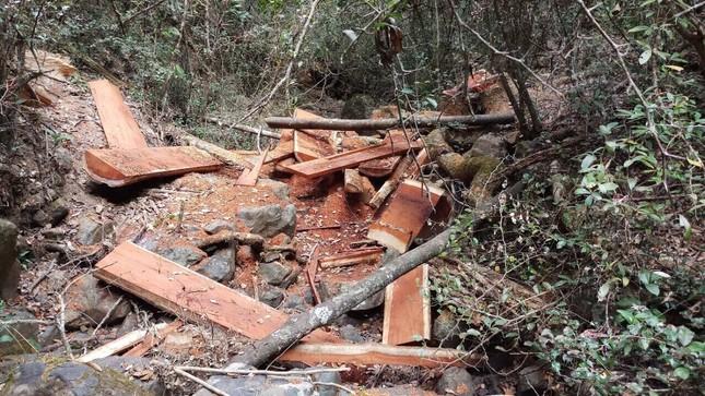 Khởi tố 16 đối tượng cưa hạ gỗ quý Vườn Quốc gia Yok Đôn ảnh 2