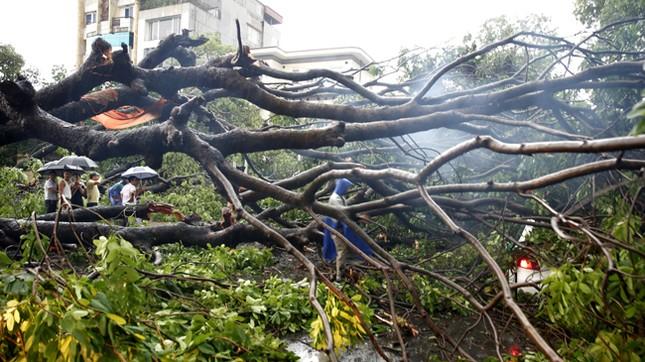Hà Nội: Dông lốc kinh hoàng, hàng trăm cây đổ trong ít phút ảnh 4