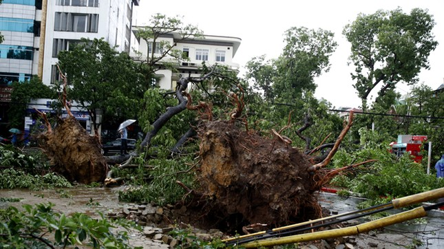 Hà Nội: Dông lốc kinh hoàng, hàng trăm cây đổ trong ít phút ảnh 1