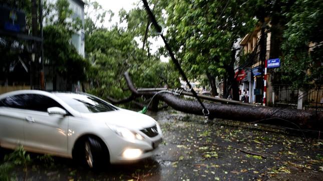 Hà Nội: Dông lốc kinh hoàng, hàng trăm cây đổ trong ít phút ảnh 5