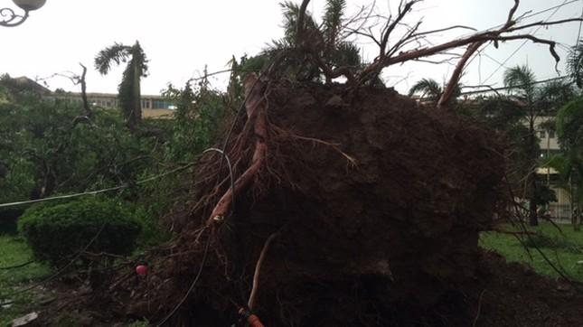 Hà Nội: Dông lốc kinh hoàng, hàng trăm cây đổ trong ít phút ảnh 2