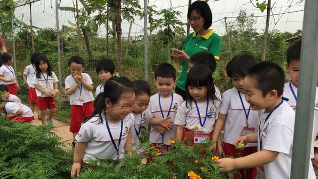 Tour thăm nông trại rau hữu cơ ảnh 1