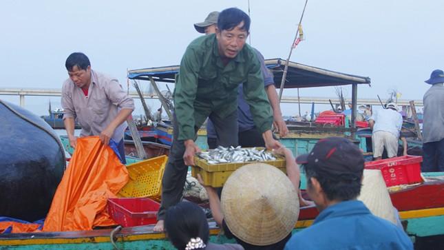 Quá trình tìm nguyên nhân cá chết: Manh mối bất ngờ ảnh 1