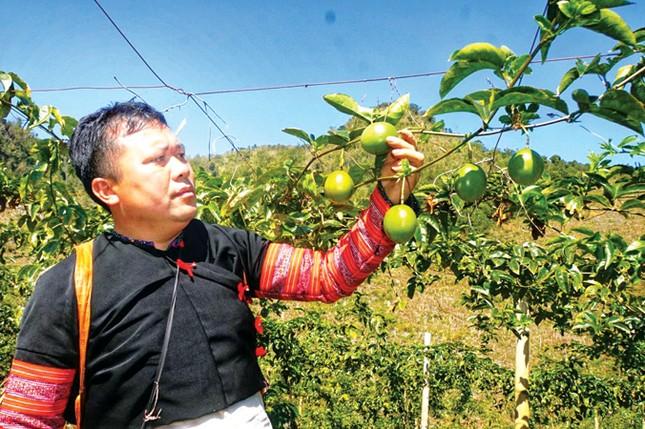 Doanh nhân Thái Hương bắt tay nông dân làm sản phẩm quốc tế ảnh 2