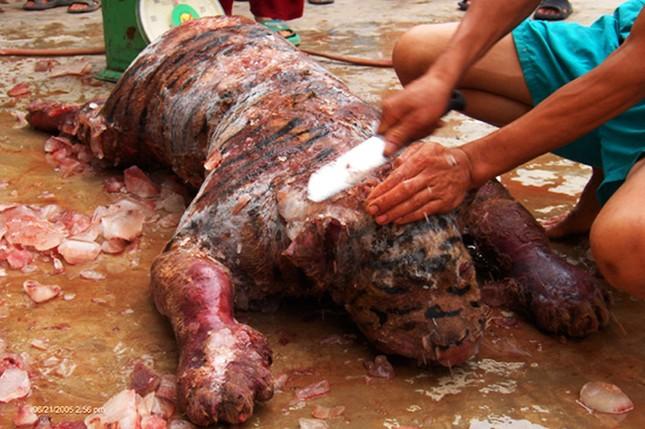 Báo động thú ăn chơi hủy hoại môi trường: Ăn tới... tuyệt chủng! ảnh 1
