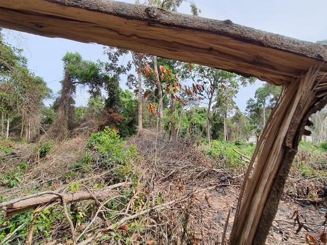 Sai phạm đất đai nghiêm trọng ở Phú Quốc: Tan rừng, nát biển ảnh 1