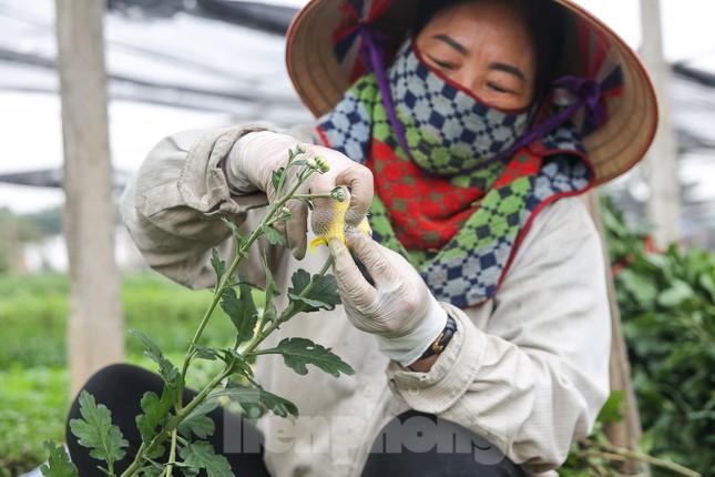 Rằm tháng Giêng, làng Tây Tựu lo 'sốt vó' vì hoa ế ẩm ảnh 7