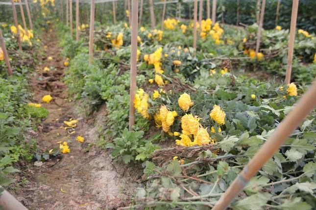 Rằm tháng Giêng, làng Tây Tựu lo 'sốt vó' vì hoa ế ẩm ảnh 5