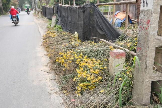 Rằm tháng Giêng, làng Tây Tựu lo 'sốt vó' vì hoa ế ẩm ảnh 4
