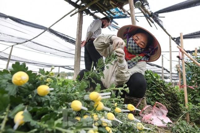 Rằm tháng Giêng, làng Tây Tựu lo 'sốt vó' vì hoa ế ẩm ảnh 6
